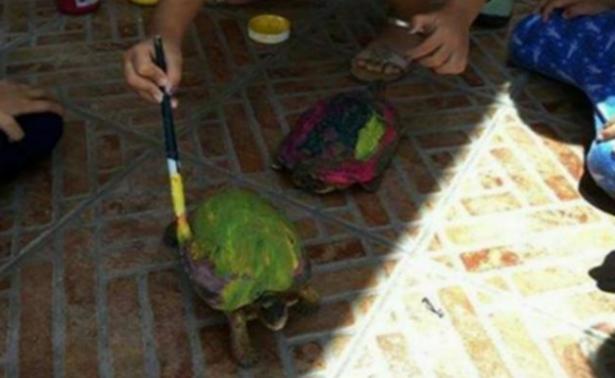 Genera controversia que niños pinten caparazón de tortugas