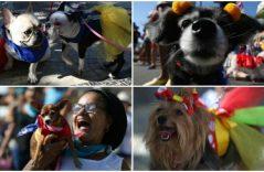Perritos celebran el carnaval en Río de Janeiro
