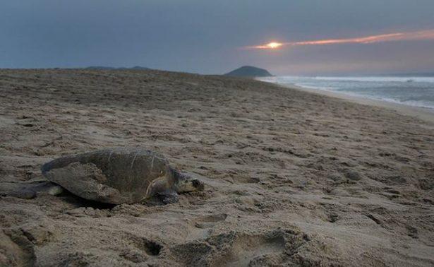 Semarnat dispone campamentos de protección marina
