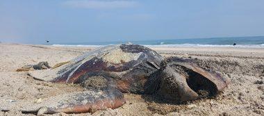 Continúa mortandad de especies marinas