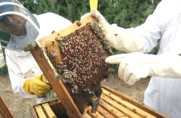 Curso de la miel
