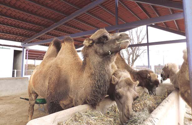 Trabajaban en circos; ahora viven en Bioparque