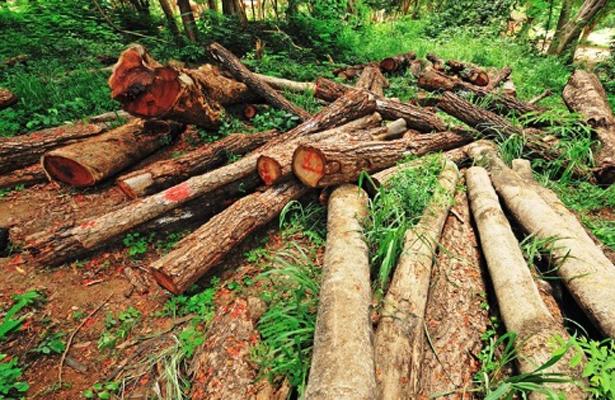 """""""Tala de árboles, tema complicado"""": regidora"""