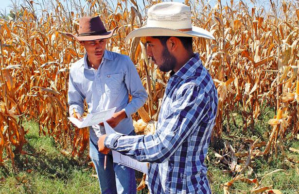UTTT condujo investigación sobre variedades de maíz