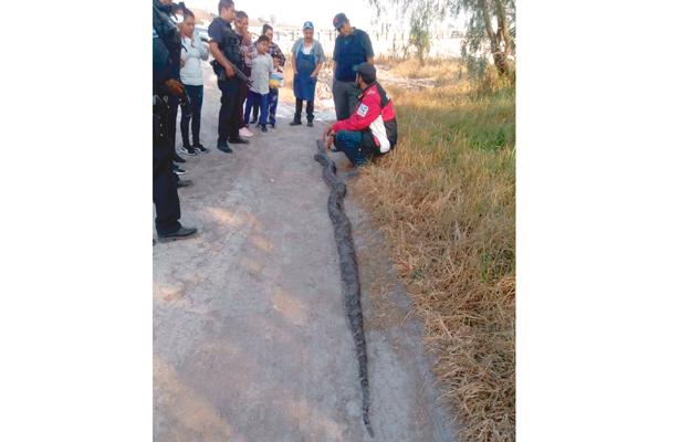 Sustazo: encuentran víbora en Atitalaquia