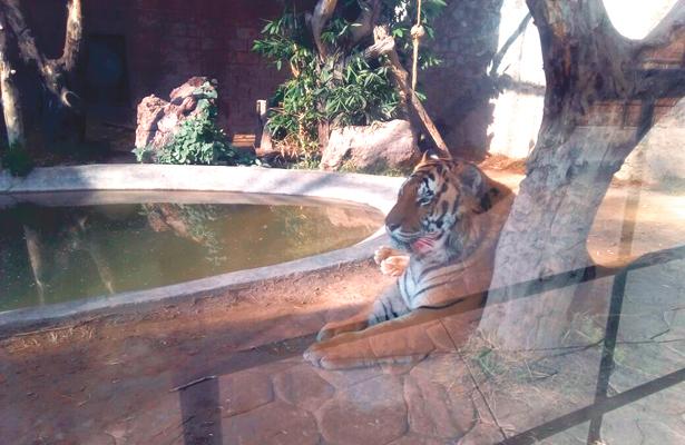 Trato digno en  bioparque de Pachuca