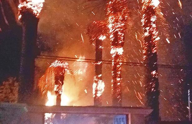Pirotecnia quema palmeras  y un sabino