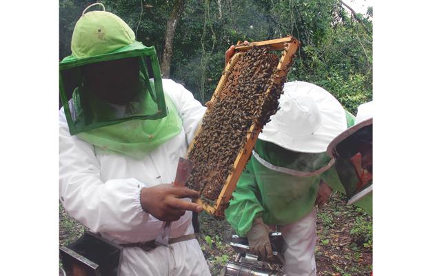 Hidalgo, con destacada producción agropecuaria