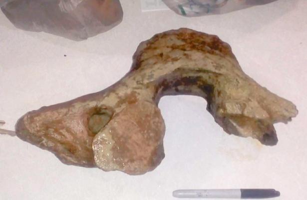 Localizan restos óseos prehistóricos
