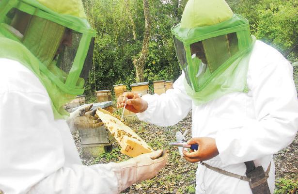Diputada pide arancel cero a miel mexicana en la Unión Europea