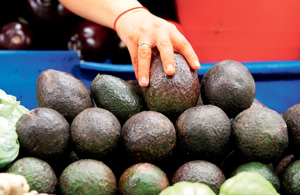Científicos mexicanos crean productos a partir de residuos de aguacate