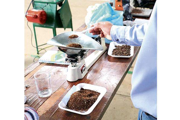 Apoyan a cafeticultores hidalguenses