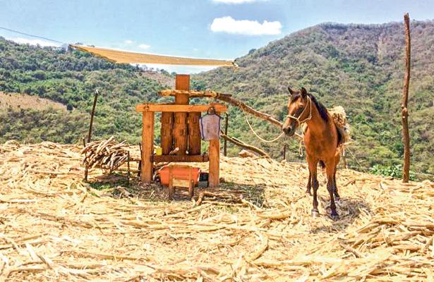 Trapiche, instrumento utilizado aún en las sierras de Hidalgo y Puebla