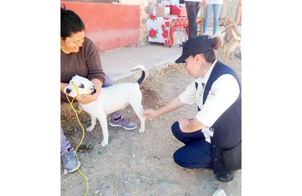Más de 13 mil perros serán inmunizados contra la rabia