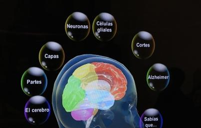 Intestino y cerebro están conectados por circuito neuronal