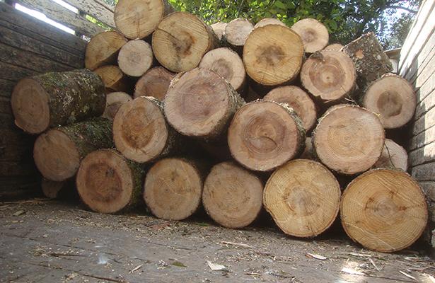 Estados Unidos impondrá arancel del 20% a madera importada de Canadá