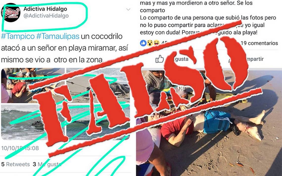 Falso ataque de cocodrilo causa alarma en playas de Tampico