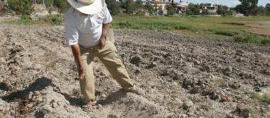 Cambio climático obliga a reprogramar cultivos en la Huasteca