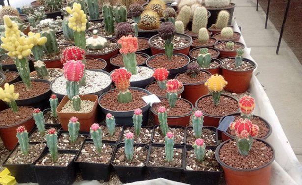 """""""El Viejo Cactus"""" conserva especies en peligro de extinción"""