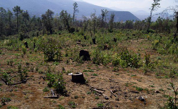Sin cuartel, lucha México contra las mafias de la deforestación