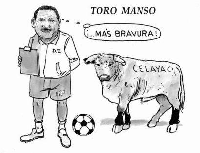 Hoy en el Cartón de Salazar / TORO MANSO