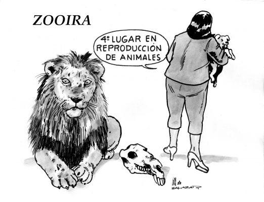 Hoy en el Cartón de Salazar / ZOOIRA