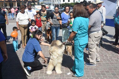 Realizan segunda feria de salud para mascotas