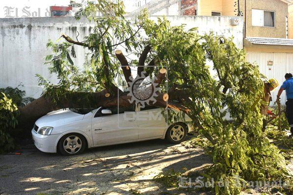 ¡Frondoso árbol aplasta auto estacionado!