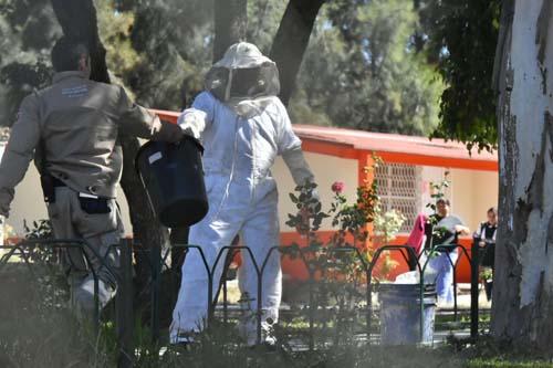 Atacan abejas a estudiantes de escuela primaria