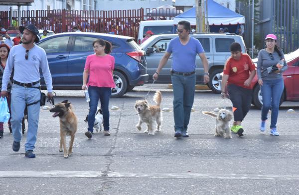 Falta acta constitutiva para albergue canino