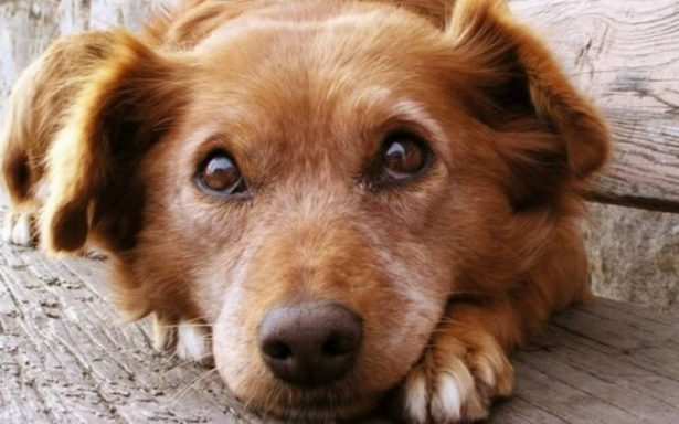 [Video] A tus mascotas no les gusta la pirotecnia; checa estos tips para cuidarlas