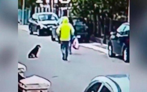 [Video] Super-can: perro callejero frustra asalto contra joven