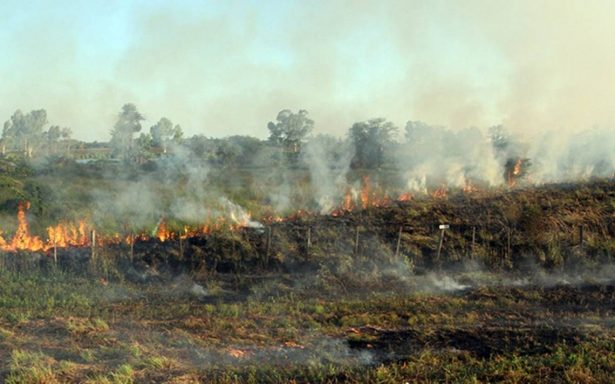 La reserva ecológica de Tembladeras, en Veracruz, es amenazada por empresarios