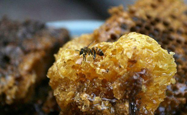 Abejas en peligro de extinción por insecticidas; disminuyó 40% producción de miel en Jalisco