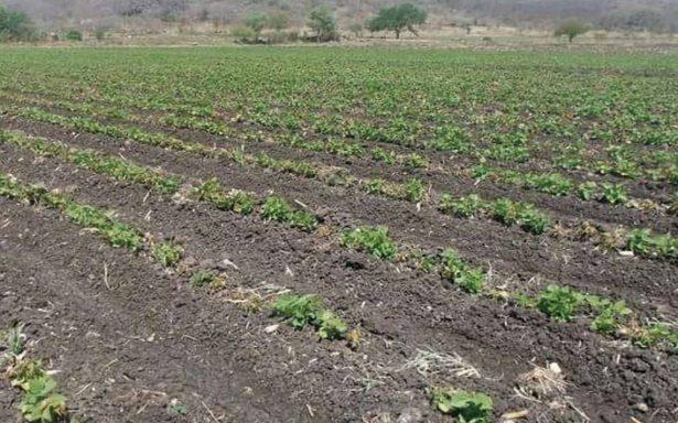 Abuso de pesticidas, genera enfermedades en Chiapas