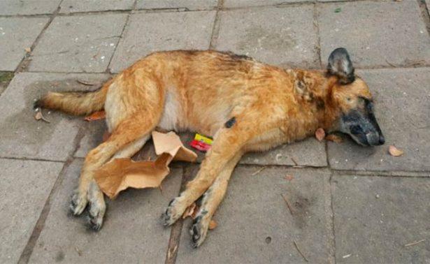 Localizan hasta 30 perros muertos en la vía pública
