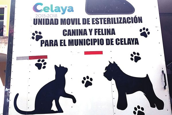 Combatirán la venta de animales en vía pública