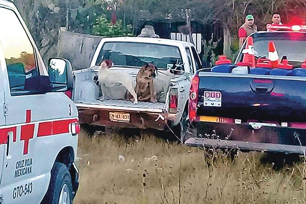 Matan perros al Capi Correa