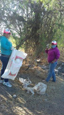 Previenen dengue en Cuenda, en Juventino Rosas