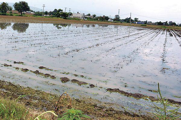 Se perdieron 550 hectáreas de cultivos