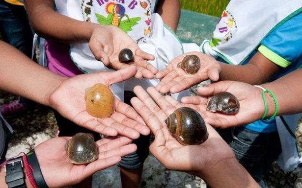 Cultivo de caracol mejora calidad de vida