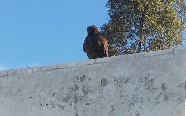 ¿Águila parada sobre un nopal? No, encuentran águila en ¡estación del metro Tláhuac!