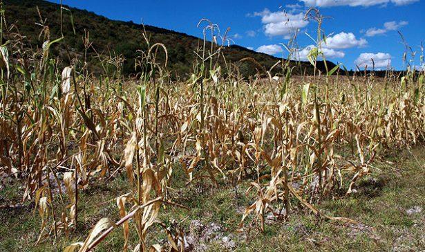 Hay agua suficiente para atender cultivos en el 2017 y 2018