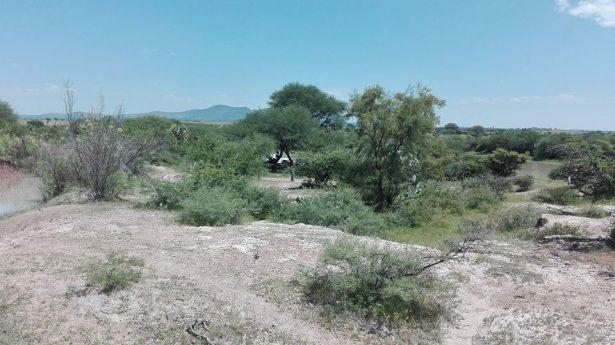 Joven se ahorca en un árbol en San José de Gracia