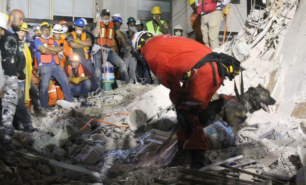 Binomio canino del Municipio capital localiza a tres víctimas del terremoto