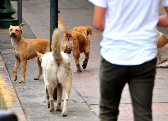 Alta la cifra negra por tortura y asesinato de mascotas: PVEM