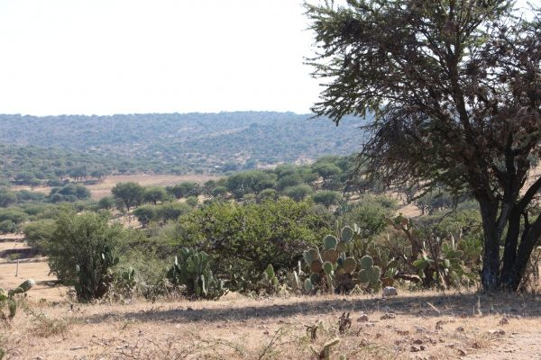 Frenado el proyecto de Bosque de Cobos