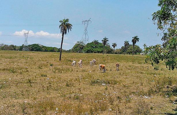 Sequía causa estragos en el sur de Tamaulipas