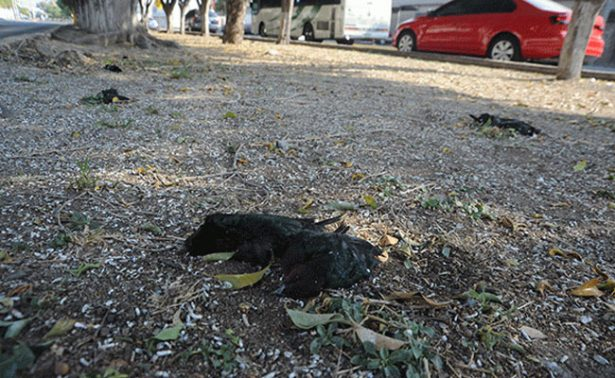 Mueren aves por contaminación en Guanajuato