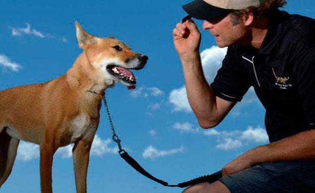 Mascotas exóticas, el grito de la moda en Australia